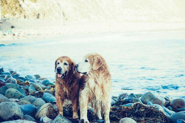 Two Dog at Stone Sea